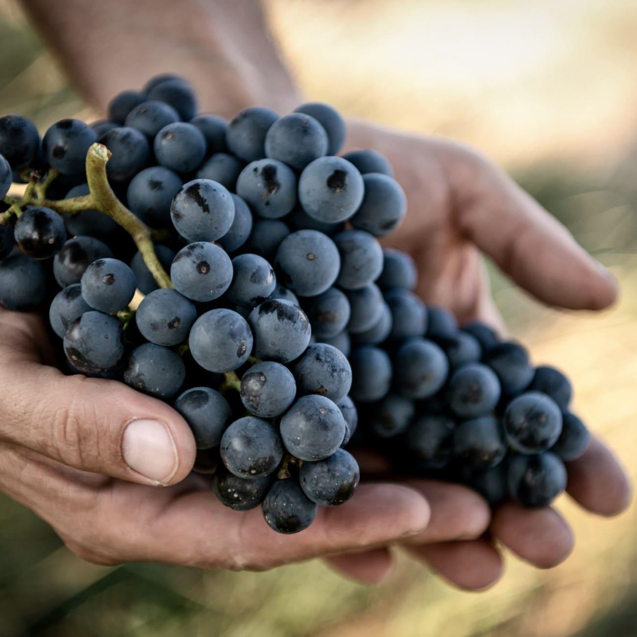 Bio Zweigelt - Naturwein - Biowein