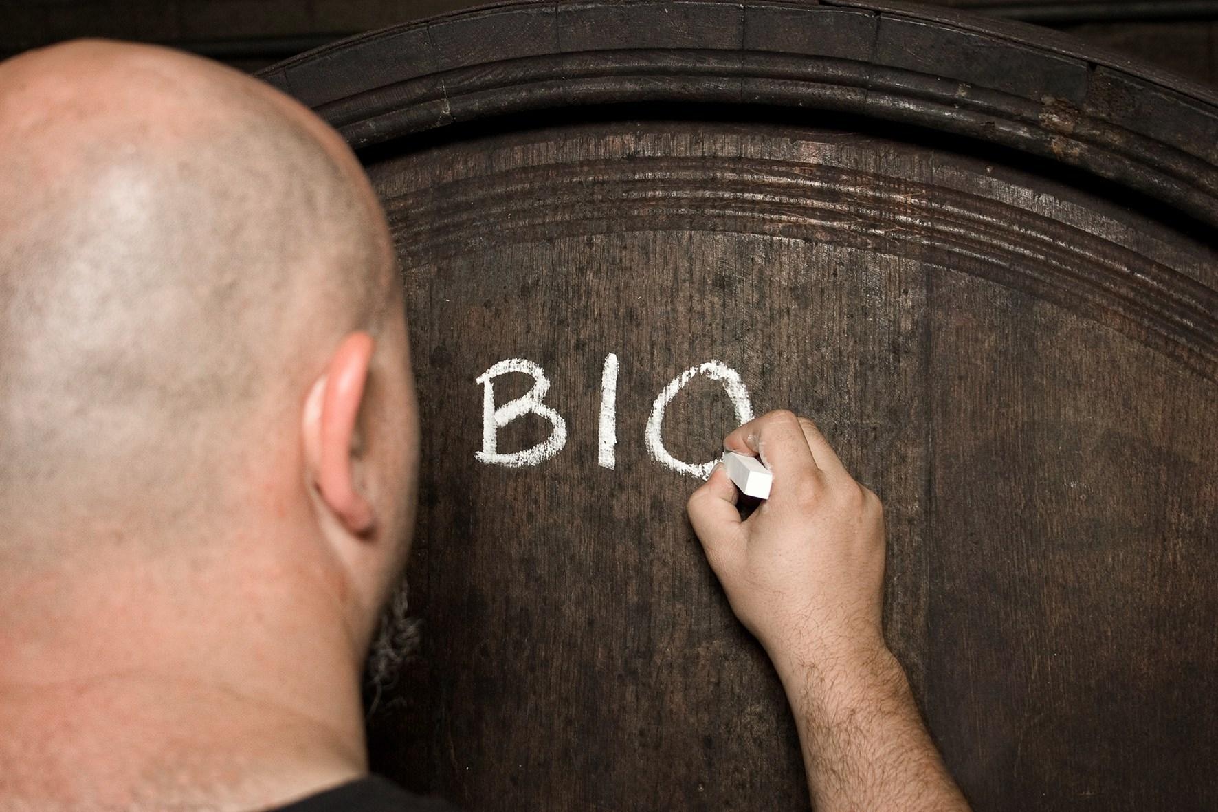 BIO - in Weingarten und Keller
