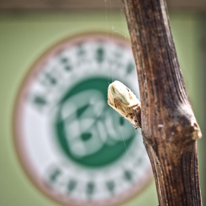 Weinverkauf_Weiden_am_See-Weingut_Hareter_Thomas