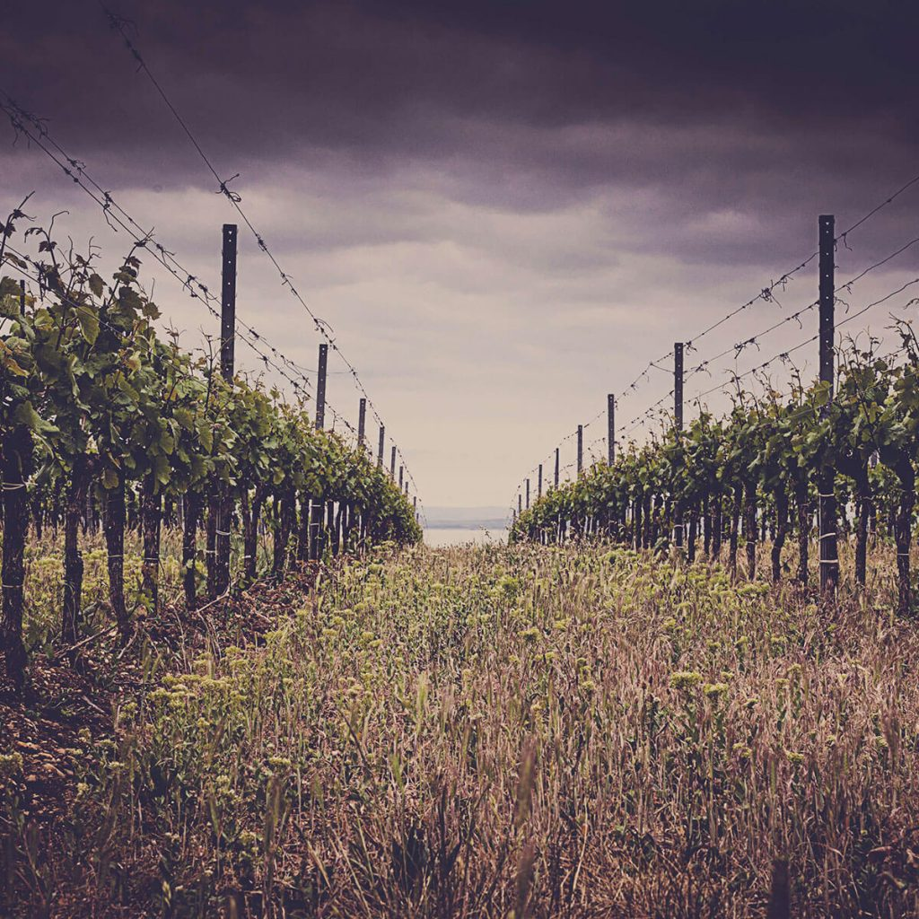 Vineyards and Soil 1